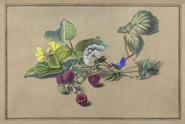 """Реплика на картину графа Ф.Толстого """"Века малины, бабочка и муравей"""", автор реплики Юлия Кравченко"""