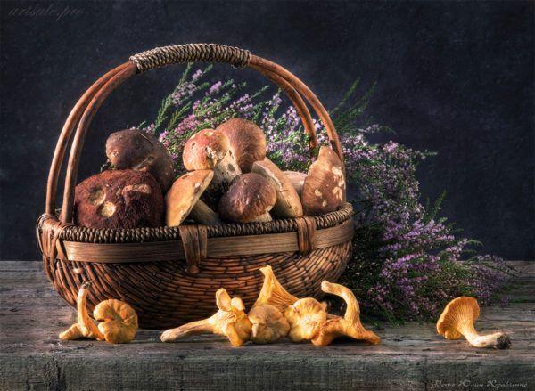 фотонатюрморт с грибами и вереском